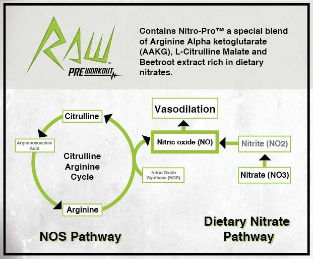 Nitric Oxide Pathways - Nitrates Boost Performance